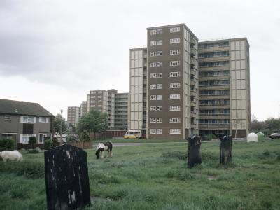 View of Meynell Street development with horses in foreground